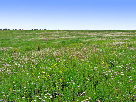 spring meadow    photo