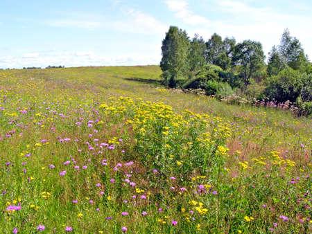 meadow near wood     photo