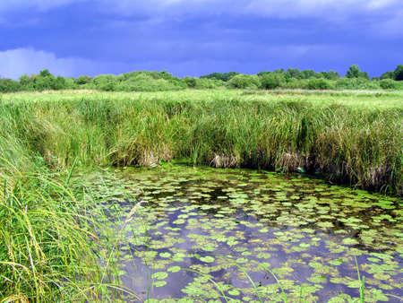 small lake on field  Stock Photo - 6002165