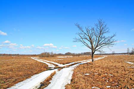 oak near roads Stock Photo - 6010208