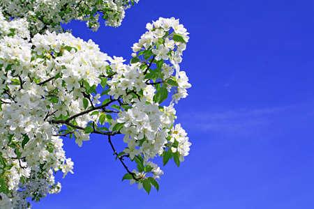 flowerses to aple trees photo