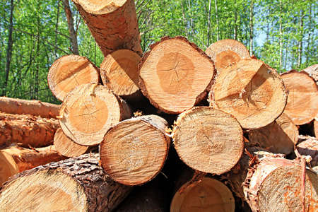 pile of logs: sawn up tree Stock Photo