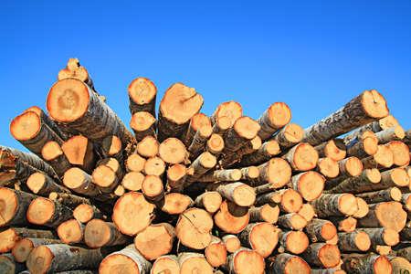 sturdy: sawn up tree Stock Photo