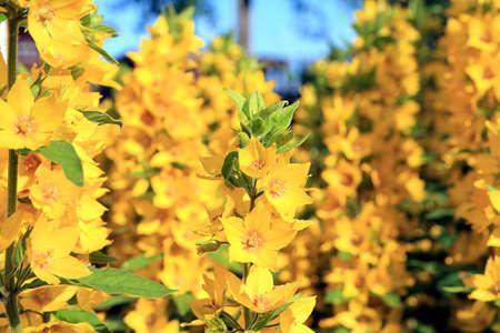 yellow flowerses Stock Photo - 6020651