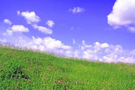 herb in field photo