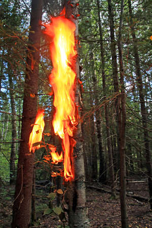 fire in wood photo