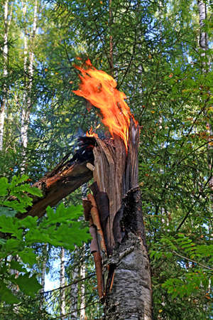 fire in wood Stock Photo - 6053249