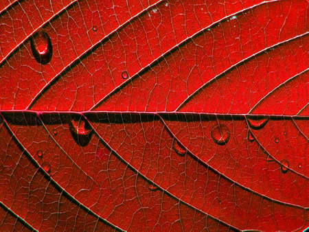 red sheet tree photo