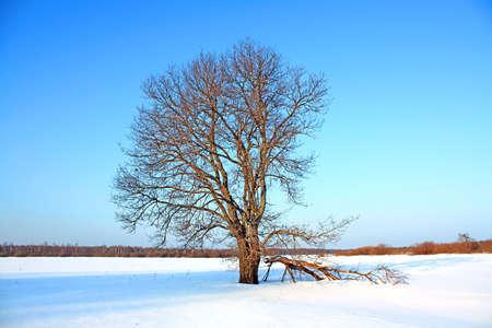 oak on field Stock Photo - 6068382