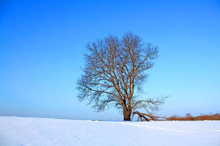 oak on field Stock Photo - 6068351