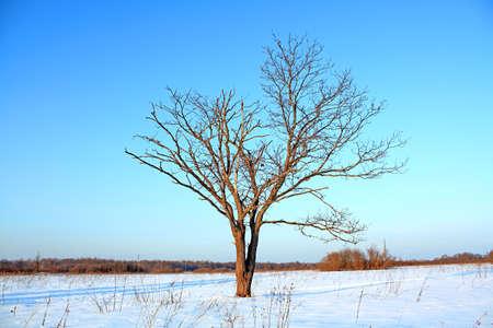 oak on field Stock Photo - 6068380