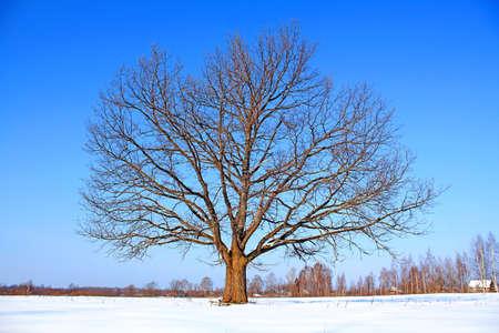 oak on field Stock Photo - 6068417