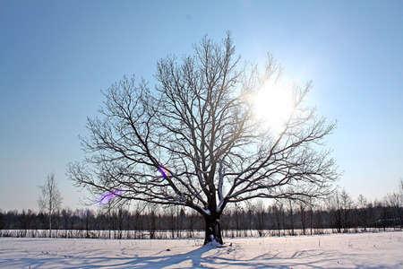 oak on field Stock Photo - 6068424
