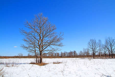oak on field Stock Photo - 6068374