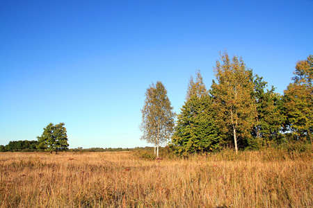 copse: yellow copse on autumn field Stock Photo