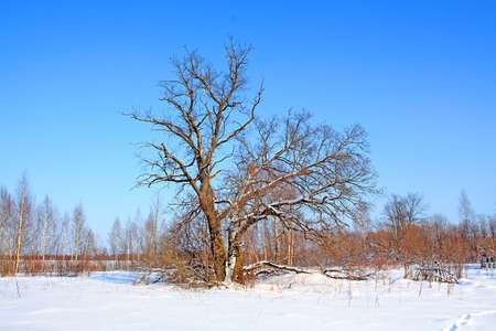 old oak on field Stock Photo - 6069767