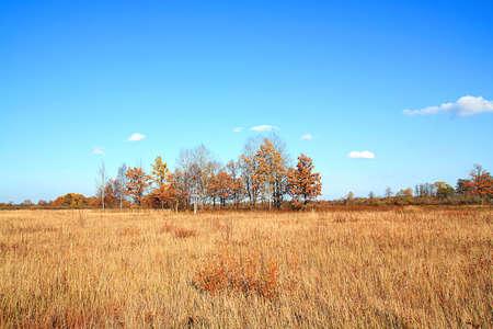 copse: copse on autumn field Stock Photo