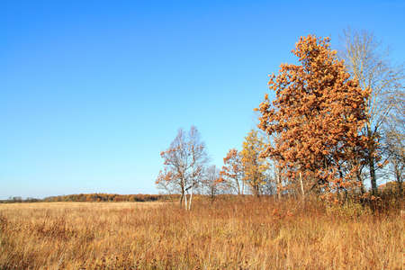 copse: copse on autumn field Stock Photo