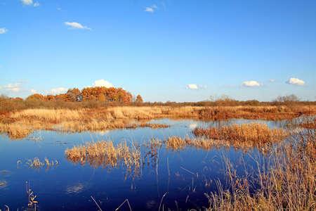 autumn marsh photo