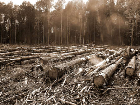 deforestation: chopping wood