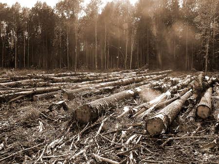 deforestacion: cortar madera