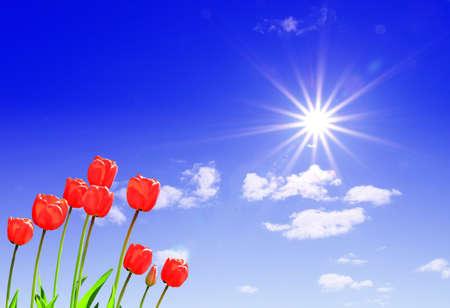 tulips under sun photo