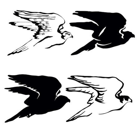 vector drawing of the hawk on white background Vector