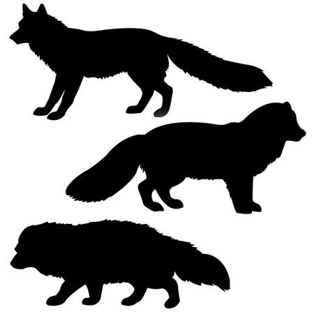 badger:   silhouette polar fox, badger, vixens isolated on white background