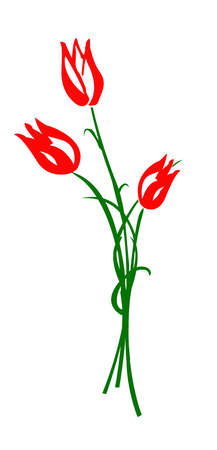 drawing tulip isolated on white background