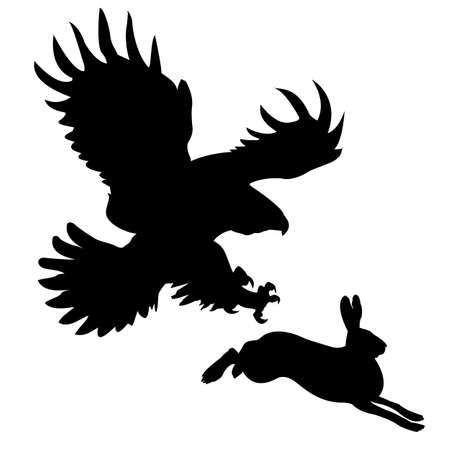 attacking:  silueta del ave voraz atacando a la liebre