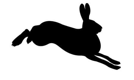 Silhouette di coniglio su sfondo bianco