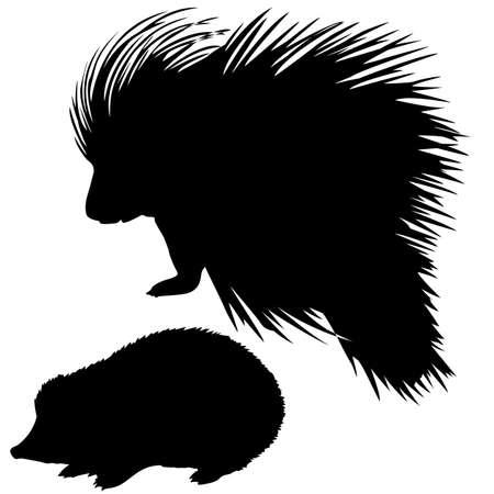 silhouette del riccio e istrice su sfondo bianco