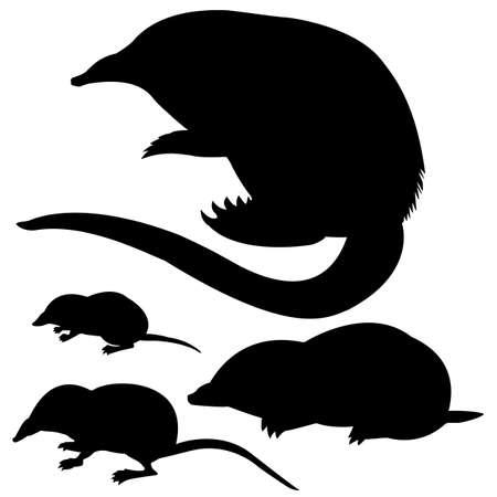 Silhouette von der Mole, die Maus und die Desmans auf weißem Hintergrund