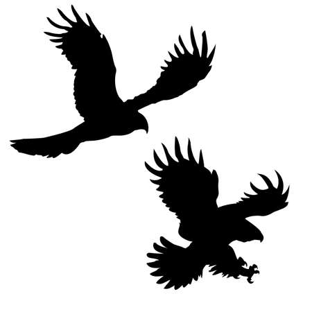 silhouette of the ravenous birds on white background Vector