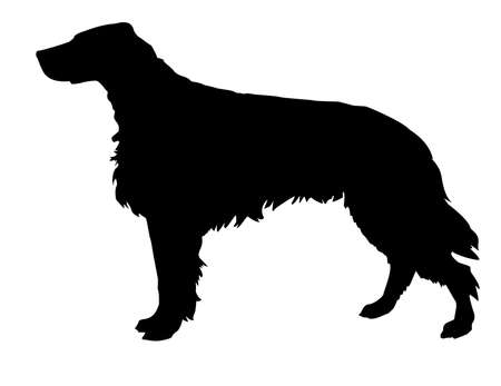 setter:   silhouette of the setter isolated on white background