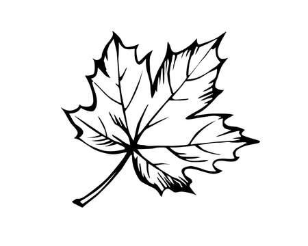 schets van het blad van de esdoorn op witte achtergrond