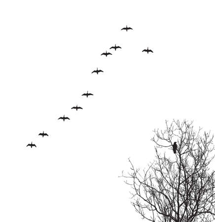 migrating animal:  silhouette geese in sky and crow on tree Illustration