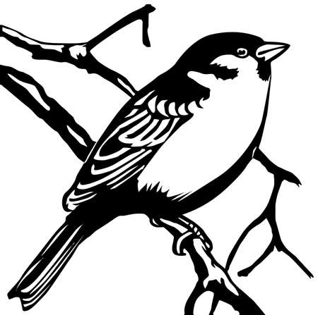 tomtit: silhouette sparrow on white background