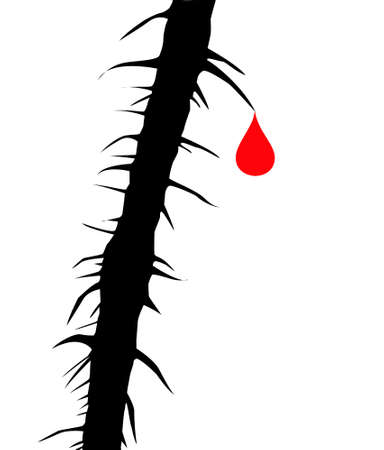drop blood on thorn of the wild rose  Vector