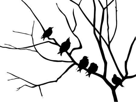 silhouette starling on branch tree Stock Vector - 6657942