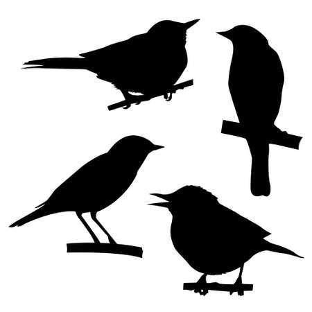 small group of object: silhouettes of the birds sitting on branch tree