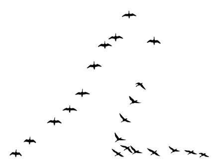 flock:  silhouettes flock geese isolated on white background