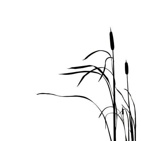 rietkraag: silhouet van de reed geïsoleerd op witte achtergrond Stock Illustratie