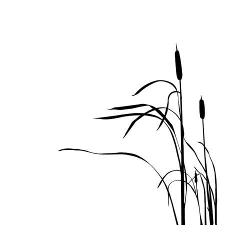 marshes: silhouette of the reed isolated on white background