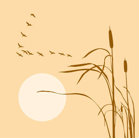drawing flock geese on bulrush    Stock Vector - 6658001