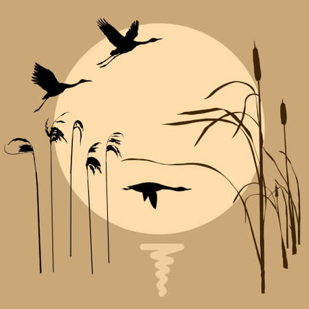 drawing flying birds on background sun Stock Vector - 6658087