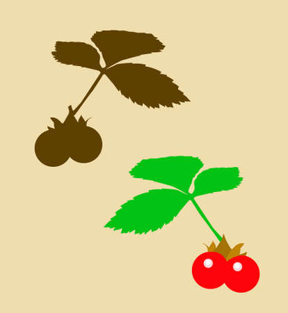 drawing of the berry bramble                   Vector