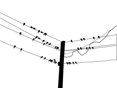 silhouette migrating swallow reposing on electric wire Stock Vector - 6657997