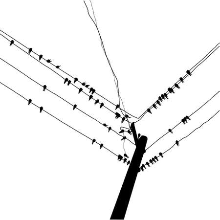 silhouette swallow reposing on electric wire Vector