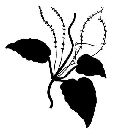 weegbree: silhouet van de weegbree op witte achtergrond Stock Illustratie